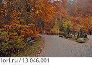 Купить «Осенний парк», эксклюзивное фото № 13046001, снято 5 ноября 2015 г. (c) Svet / Фотобанк Лори