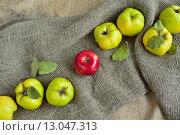 Яблоки и айвы на холщовой ткани. Стоковое фото, фотограф Станислав Самойлик / Фотобанк Лори