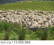 Купить «herd instinct», фото № 13056989, снято 22 мая 2019 г. (c) PantherMedia / Фотобанк Лори