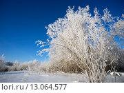Купить «Белоснежные деревья в яркий солнечный день», фото № 13064577, снято 11 ноября 2015 г. (c) Алексей Маринченко / Фотобанк Лори