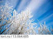 Купить «Ветки, покрытые инеем на фоне живописного неба», фото № 13064605, снято 12 ноября 2015 г. (c) Алексей Маринченко / Фотобанк Лори