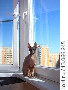 Купить «Кошка сидит на подоконнике», эксклюзивное фото № 13066245, снято 20 августа 2015 г. (c) Яна Королёва / Фотобанк Лори
