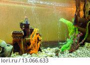 Купить «Декорация аквариума - подводный замок», фото № 13066633, снято 13 октября 2015 г. (c) Евгений Ткачёв / Фотобанк Лори