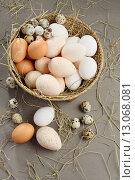 Купить «Various eggs», фото № 13068081, снято 1 ноября 2015 г. (c) Stockphoto / Фотобанк Лори