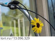 Купить «Fahrradlenker mit Blume dekoriert», фото № 13096329, снято 21 апреля 2019 г. (c) PantherMedia / Фотобанк Лори