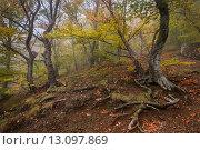 Купить «Осенний лес на Демерджи. Крым», фото № 13097869, снято 22 октября 2015 г. (c) Оксана Гильман / Фотобанк Лори