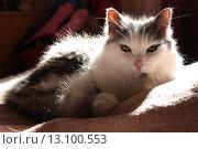 Кошка. Стоковое фото, фотограф Надежда Румянцева / Фотобанк Лори