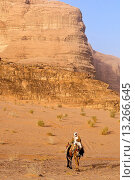 Купить «A beduin man with his camels, Wadi Rum desert, Jordan, Middle East.», фото № 13266645, снято 17 декабря 2009 г. (c) age Fotostock / Фотобанк Лори