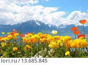 Купить «Flowers against mountains and lake Geneva from the Embankment in Montreux. Switzerland», фото № 13685845, снято 16 октября 2018 г. (c) age Fotostock / Фотобанк Лори