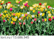 Купить «Beautiful spring flowers in a green grass», фото № 13686945, снято 13 ноября 2018 г. (c) age Fotostock / Фотобанк Лори