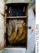 Купить «honeycombs in a tree trunk», фото № 13752053, снято 5 июля 2020 г. (c) age Fotostock / Фотобанк Лори