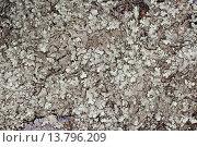 Купить «Schuesselflechte (Xanthoparmelia spec., Parmelia spec., Neofuscelia spec., Neofusciela spec.)», фото № 13796209, снято 24 февраля 2019 г. (c) age Fotostock / Фотобанк Лори