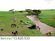 Купить «bale plateau, ethiopia », фото № 13820533, снято 16 июля 2018 г. (c) age Fotostock / Фотобанк Лори