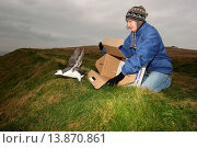 Купить «Seabird rescue, cleaned Common Guillemot (Uria aalge) adult, winter plumage, being released by RSPCA West Hatch staff after contamination from polyisobutene...», фото № 13870861, снято 19 ноября 2017 г. (c) age Fotostock / Фотобанк Лори