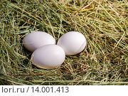 Яйца на сене. Стоковое фото, фотограф Дмитрий Зубаркин / Фотобанк Лори