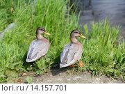 Купить «two ducks on river bank», фото № 14157701, снято 24 июля 2015 г. (c) Syda Productions / Фотобанк Лори