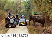 Купить «Asiatic elephant, Asian elephant (Elephas maximus), mahout on his working elephant clearing the way for some tourist jeeps on a soil road, India, Madhya Pradesh, Kanha National Park», фото № 14193733, снято 22 октября 2018 г. (c) age Fotostock / Фотобанк Лори