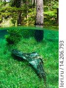 Купить «immersed forest in the Green Lake, Gruener See, Austria, Styria, Tragoess», фото № 14206793, снято 24 марта 2018 г. (c) age Fotostock / Фотобанк Лори