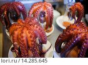Купить «Octopus for ´Pulpo a feira´ octopus in Galician style, Pulpería María Pita, En Plaza María Pita 20, Coruña city, Galicia, Spain», фото № 14285645, снято 25 сентября 2013 г. (c) age Fotostock / Фотобанк Лори