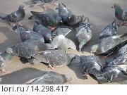 Голубь - птица мира. Стоковое фото, фотограф Ирина Мандровская / Фотобанк Лори