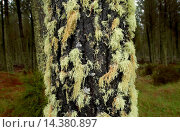 Купить «Moss and lichens on tree, North Island, New Zealand», фото № 14380897, снято 15 ноября 2018 г. (c) age Fotostock / Фотобанк Лори