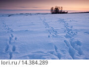 Купить «Animal tracks across the field in traditional snow scene in The Cotswolds, Swinbrook, Oxfordshire, United Kingdom», фото № 14384289, снято 20 января 2019 г. (c) age Fotostock / Фотобанк Лори