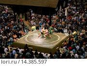 Купить «Sumo wrestlers in the ring watched by a big crowd in Tokyo, Japan», фото № 14385597, снято 24 июля 2019 г. (c) age Fotostock / Фотобанк Лори
