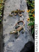 Купить «Lizards made of earth», фото № 14406737, снято 21 января 2019 г. (c) age Fotostock / Фотобанк Лори