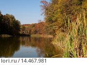 Купить «Осенний пейзаж с прудом осенним днём», эксклюзивное фото № 14467981, снято 23 сентября 2015 г. (c) Игорь Низов / Фотобанк Лори