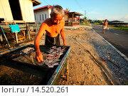 Купить «A man places fishes on the fence for sun drying, sarawak, malaysia, borneo», фото № 14520261, снято 29 марта 2013 г. (c) age Fotostock / Фотобанк Лори
