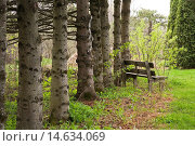 """Купить «Row of pine tree trunks and an old wooden bench in the """"Jardin du Grand Portage"""" garden in spring, Saint-Didace, Lanaudiere, Quebec, Canada. This image...», фото № 14634069, снято 12 мая 2012 г. (c) age Fotostock / Фотобанк Лори"""
