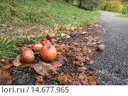 Купить «green close up macro fruit», фото № 14677965, снято 22 октября 2018 г. (c) PantherMedia / Фотобанк Лори