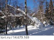 Купить «Зимний лес, солнечный зимний день, снежный сугроб  на березе. Природный парк Таганай», фото № 14679169, снято 10 марта 2013 г. (c) Юрий Карачев / Фотобанк Лори