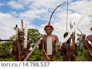 Купить «, group of Dani warriors in the shrubland, Indonesia, Western New Guinea, Baliem Valley», фото № 14788537, снято 19 июня 2011 г. (c) age Fotostock / Фотобанк Лори