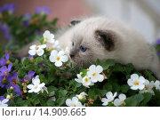 Задумчивый котенок в цветах. Стоковое фото, фотограф Александр Парфенов / Фотобанк Лори