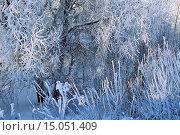 Купить «Зимний пейзаж - заиндевелые деревья в холодную солнечную погоду», фото № 15051409, снято 26 июня 2019 г. (c) Зезелина Марина / Фотобанк Лори