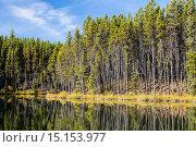 Купить «Herbert Lake and forest in the Banff National Park, Alberta, Canada», фото № 15153977, снято 18 сентября 2012 г. (c) age Fotostock / Фотобанк Лори