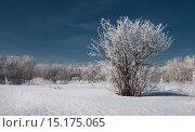 Купить «Зима. Иней. Дерево», фото № 15175065, снято 16 июня 2019 г. (c) Дмитрий Третьяков / Фотобанк Лори
