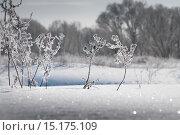 Купить «Зима. Иней. Кустарник», фото № 15175109, снято 20 ноября 2017 г. (c) Дмитрий Третьяков / Фотобанк Лори