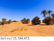 Пальмы в пустыне (2015 год). Стоковое фото, фотограф Михаил Пряхин / Фотобанк Лори