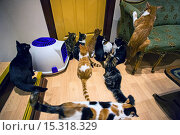 Купить «If your fe-line like you want to have lunch with your kitty then why not head to London's first ever cat café! Lady Dinah's Cat Emporium allows visitors...», фото № 15318329, снято 9 июня 2014 г. (c) age Fotostock / Фотобанк Лори