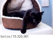 Купить «If your fe-line like you want to have lunch with your kitty then why not head to London's first ever cat café! Lady Dinah's Cat Emporium allows visitors...», фото № 15320381, снято 9 июня 2014 г. (c) age Fotostock / Фотобанк Лори