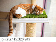 Купить «If your fe-line like you want to have lunch with your kitty then why not head to London's first ever cat café! Lady Dinah's Cat Emporium allows visitors...», фото № 15320949, снято 9 июня 2014 г. (c) age Fotostock / Фотобанк Лори