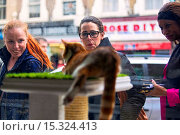 Купить «If your fe-line like you want to have lunch with your kitty then why not head to London's first ever cat café! Lady Dinah's Cat Emporium allows visitors...», фото № 15324413, снято 9 июня 2014 г. (c) age Fotostock / Фотобанк Лори