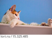 Купить «If your fe-line like you want to have lunch with your kitty then why not head to London's first ever cat café! Lady Dinah's Cat Emporium allows visitors...», фото № 15325485, снято 9 июня 2014 г. (c) age Fotostock / Фотобанк Лори