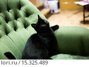 Купить «If your fe-line like you want to have lunch with your kitty then why not head to London's first ever cat café! Lady Dinah's Cat Emporium allows visitors...», фото № 15325489, снято 9 июня 2014 г. (c) age Fotostock / Фотобанк Лори