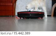 Купить «Котенок играет с роботом-пылесосом», видеоролик № 15442389, снято 5 декабря 2015 г. (c) Володина Ольга / Фотобанк Лори