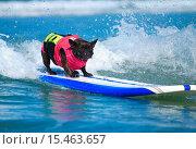 Купить «2014 Surf Dog Surf-A-Thon presented by the Helen Woodward Animal Center Where: Del Mar, California, United States When: 07 Sep 2014 Credit: Tony Forte/WENN», фото № 15463657, снято 7 сентября 2014 г. (c) age Fotostock / Фотобанк Лори
