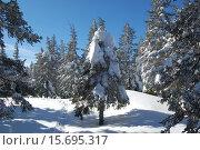 Купить «Зимний лес, ели в снегу, природный парк Таганай, южный урал», фото № 15695317, снято 10 марта 2013 г. (c) Юрий Карачев / Фотобанк Лори