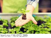 Купить «close up of woman hand holding seedling sprout», фото № 16012289, снято 25 февраля 2015 г. (c) Syda Productions / Фотобанк Лори